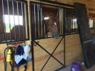 Stall & Field Board