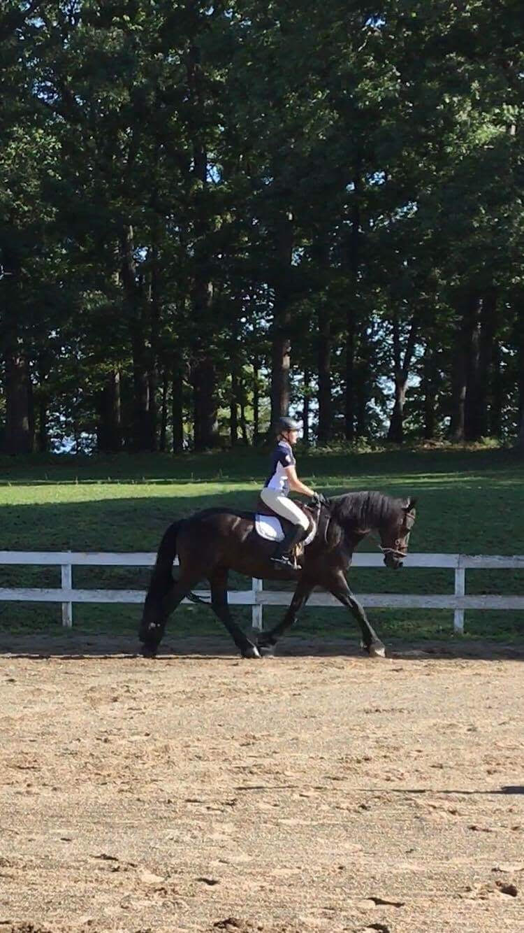 fh clinic friesian