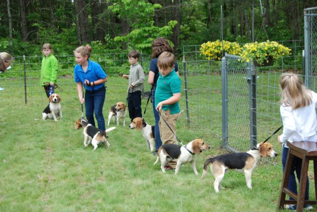 kids beagles